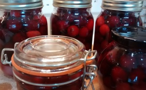 cherries in jars